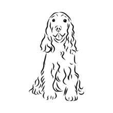 Spaniel Dog Sketch