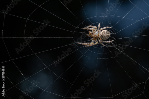 spider on a web Fototapet
