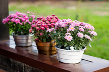 Autumn. Pots With Colorful Chr...