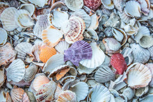 Sea Shells. Different Size And Variety. Store For Sale. Stack Way.