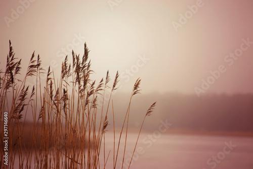 Fotografie, Obraz  Bulrush on the lake in winter
