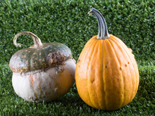 Two Pumpkins Over Grass Backgr...