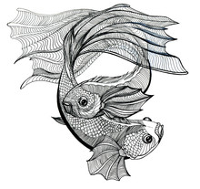 Koi Carps, Doodle Illustration...