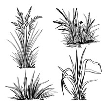 A Set Of Hand-drawn Grass, Black Forts For Graphic Design.