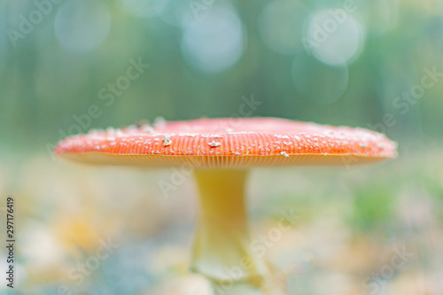Photo Mushroom in the autumn forest