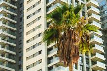 Tel Aviv High-rise Building And Palm Tree