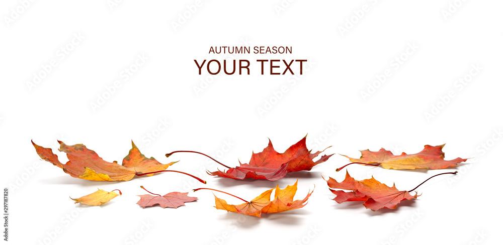 Fototapety, obrazy: autumn season concept, maple leaf isolated on white background