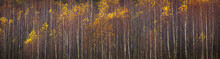 Web Banner Autumnal Textural S...