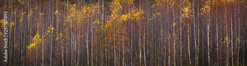 Route dans la forêt Web banner autumnal textural scenic background, toned in vintage style