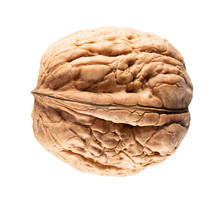 Walnut In Shell Isolated On A White Background