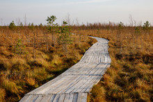 Wooden Path Walkway Through We...