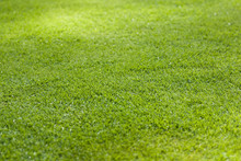 Grass Meadow For Sport Fields - Background Texture