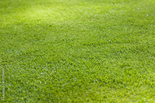 Poster Pres, Marais Grass meadow for sport fields - Background texture