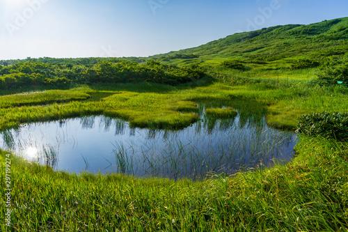 Fototapeta 【山形県】日本百名山 夏の月山 弥陀ヶ原湿原