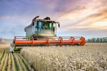 Combine Harvester Harvests Rip...