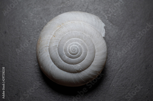 shell on black background Canvas Print