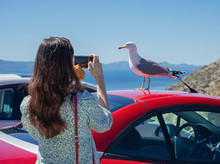 A Woman Takes A Picture Of A Seagull