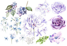Watercolor Set With Violet And...