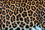 Fototapeta Zwierzęta - Real skin texture of Leopard