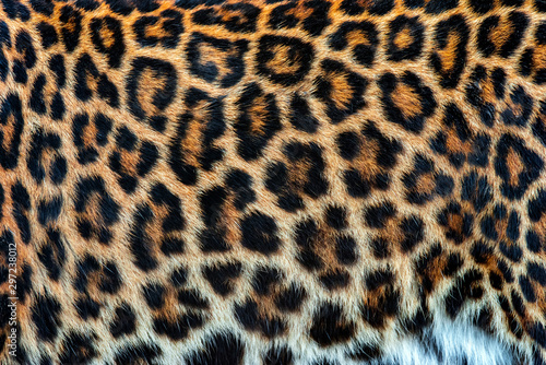 Real skin texture of Leopard Canvas Print