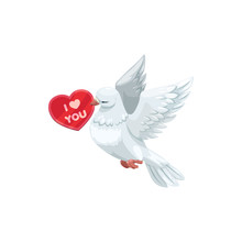 Heart Shape Card And White Dove