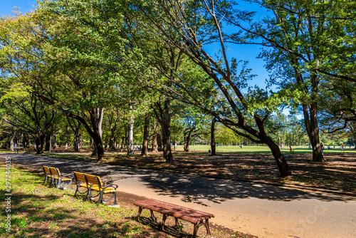 東京武蔵野 小金井公園の風景