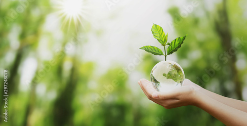 Poster Pistachio hand holding glass globe ball with tree growing and green nature blur background. eco concept