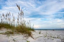 Vivid Beach Scene