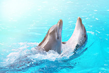 Dolphins Dancing Into Pool On ...