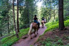 Gruppe Von Mädchen Auf Haflinger Pferden Reiten Gemütlich Durch Einen Waldpfad