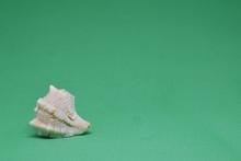 Small Triton Seashell With A F...