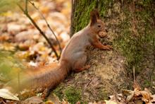 Squirrel Sits On The Asphalt I...