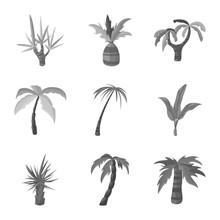 Vector Design Of Jungle And Botanical Symbol. Set Of Jungle And Flora Vector Icon For Stock.