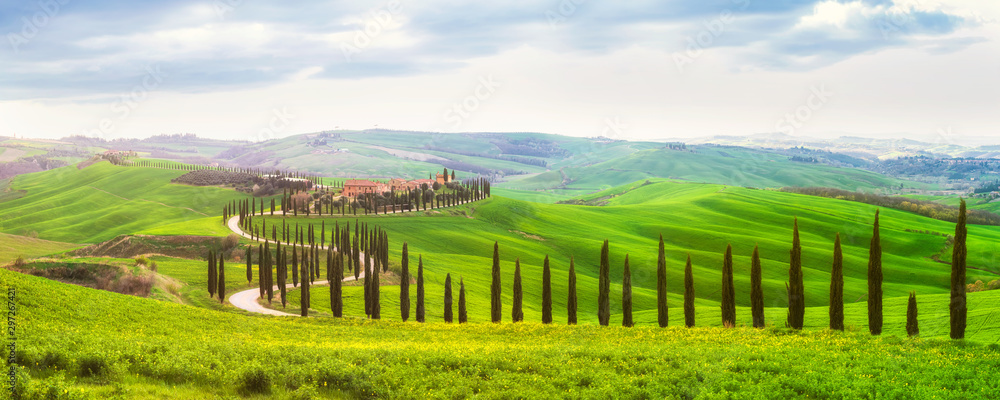 Fototapety, obrazy: Green spring in Tuscany / Amazing spring landscape with green rolling hills, cypresses and farm houses in the heart of Tuscany, Italy