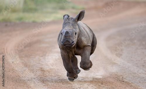 Valokuva rhinoceros in zoo