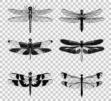 Vector Black Dragonfly Icons S...