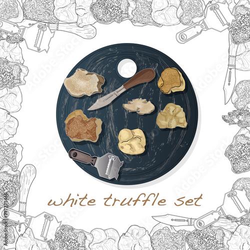 Fototapeta Truffle mushroom illustration on white. Vector image set obraz