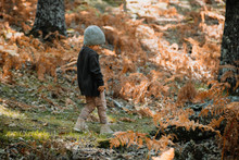 Little Girl In An Autumn Fores...