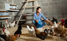 Young Woman Feeding Hens In A ...