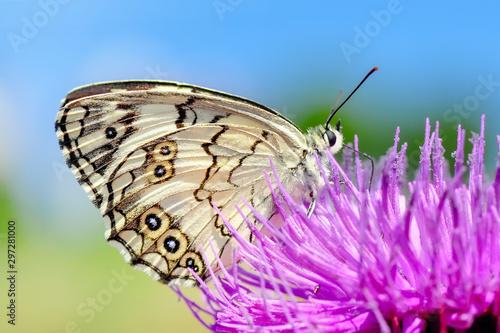 Deurstickers Vlinder Closeup beautiful butterflies sitting on the flower.