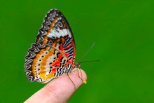 Stock Image Butterfly At Your ...