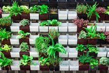 Green Ornamental Plant Hanging...