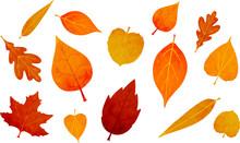 Autumn Falling Leaves Isolated...