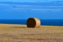 Hay Bails By The Sea.