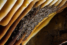 African Honeybees On An Open B...