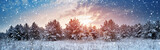 Fototapeta  - Pine trees in winter landscape at sunset