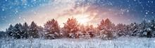 Pine Trees In Winter Landscape...