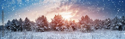 Photo Stands Landscapes Pine trees in winter landscape at sunset