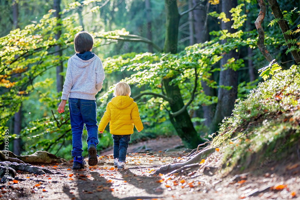Fototapety, obrazy: Portrait of toddler boy and his preschool brother, walking on a little forest path on a sunny day