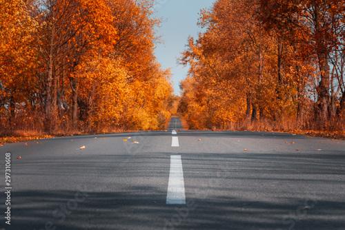Empty asphalt road in autumn forest. Autumnal background